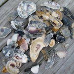 Treasures from Rodanthe Beaches
